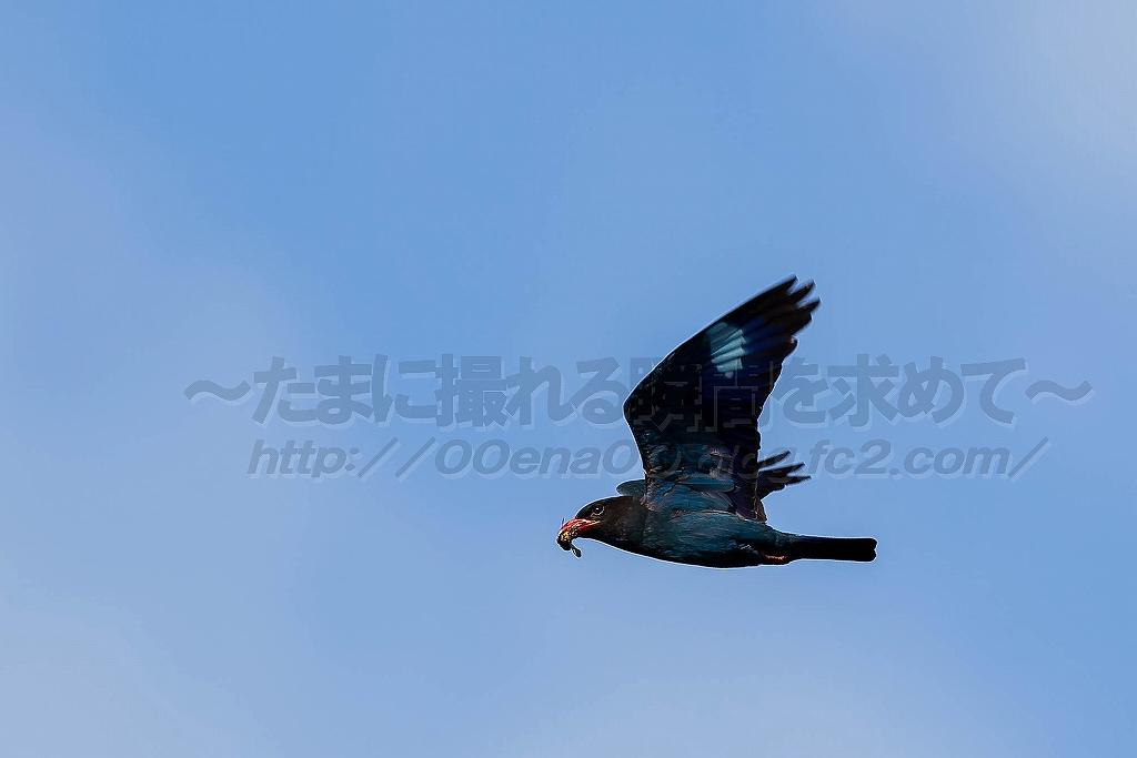 1DX_6431.jpg