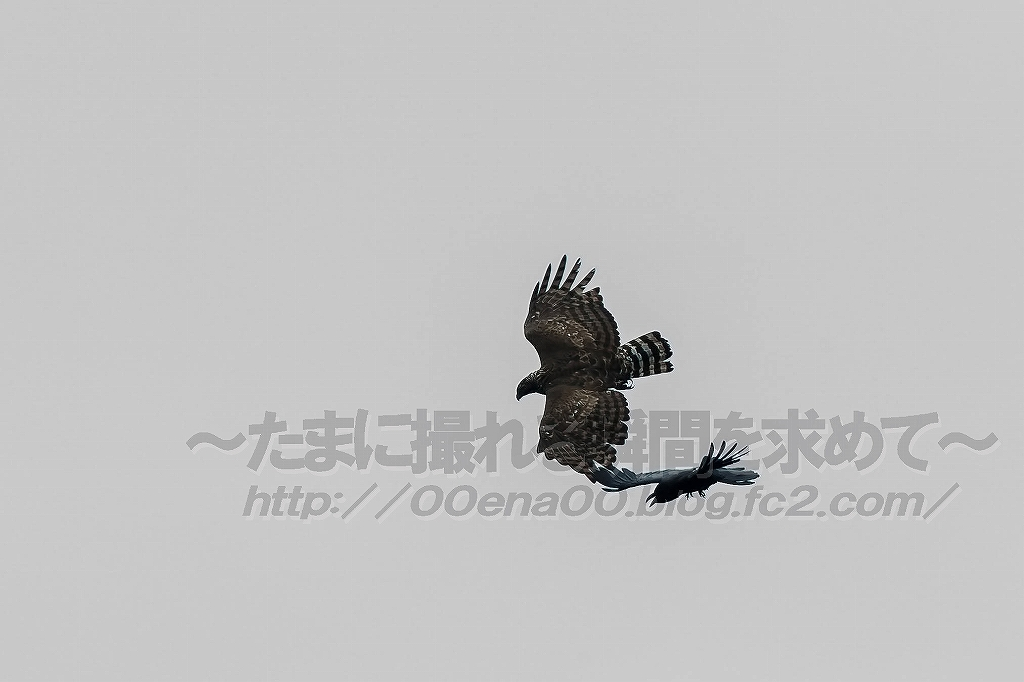 1DX_7546.jpg