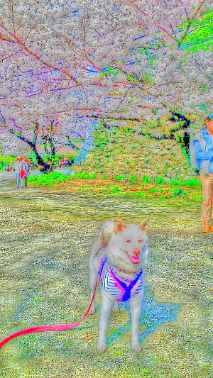 2014033022252046f.jpg