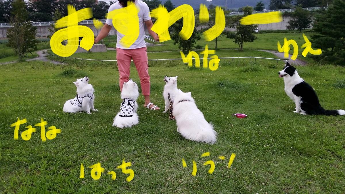 20140824_175106.jpg