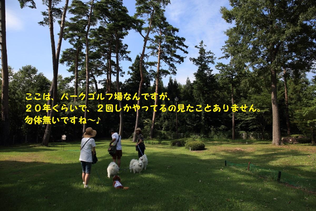 3_201408232037243e7.jpg