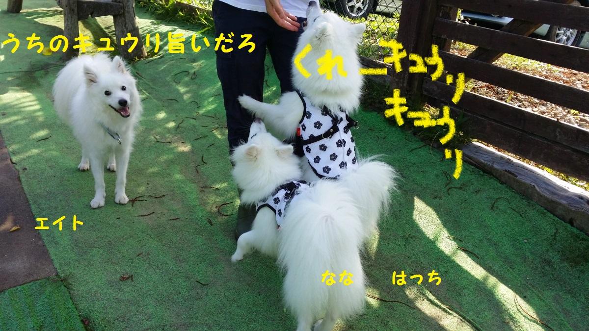 4_20140817101745efb.jpg