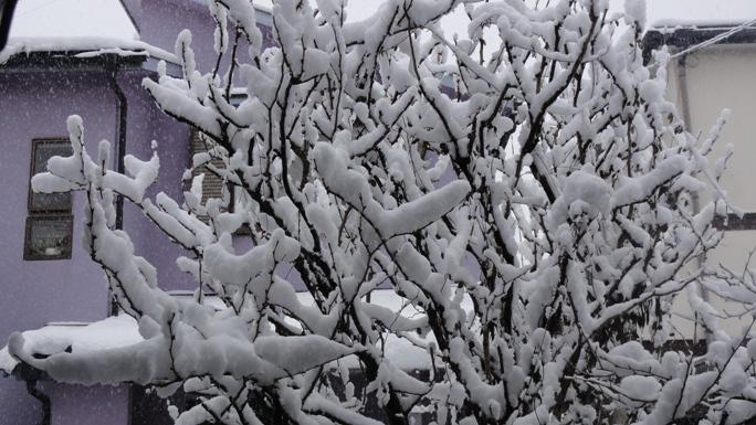 二度目の2月の大雪20140214B