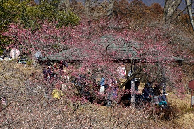 青梅吉野梅郷祭り20140316-17A