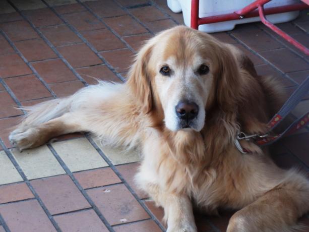 散歩で出会った犬20140324