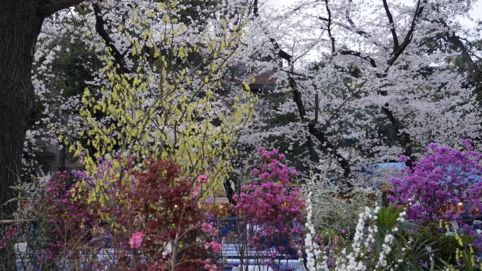 靖国神社&桜20140331-5
