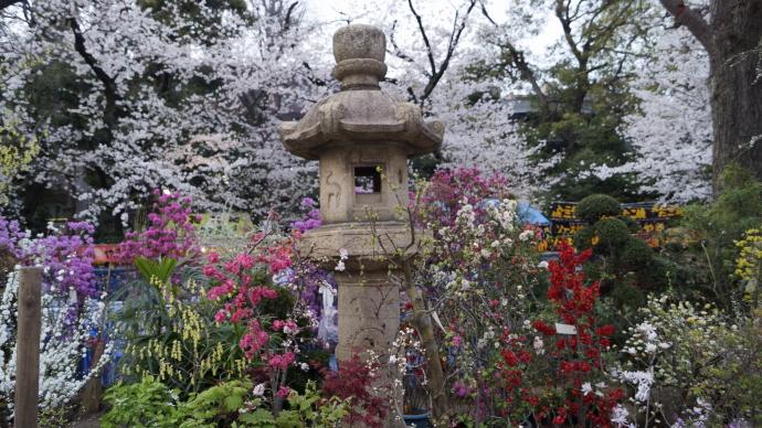 靖国神社&桜20140331-4