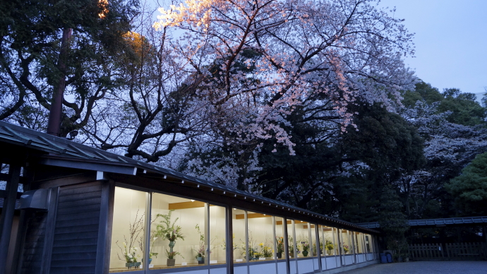 靖国神社&桜20140331-017