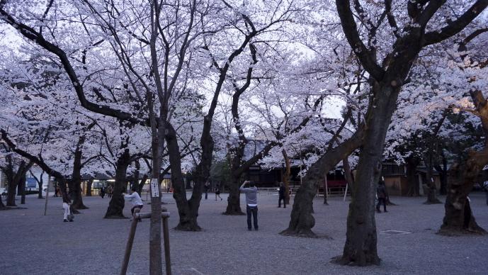 靖国神社&桜20140331-20