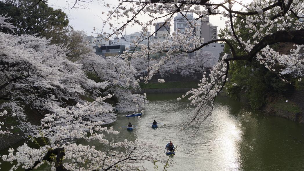 千鳥ヶ淵-A201桜20140331