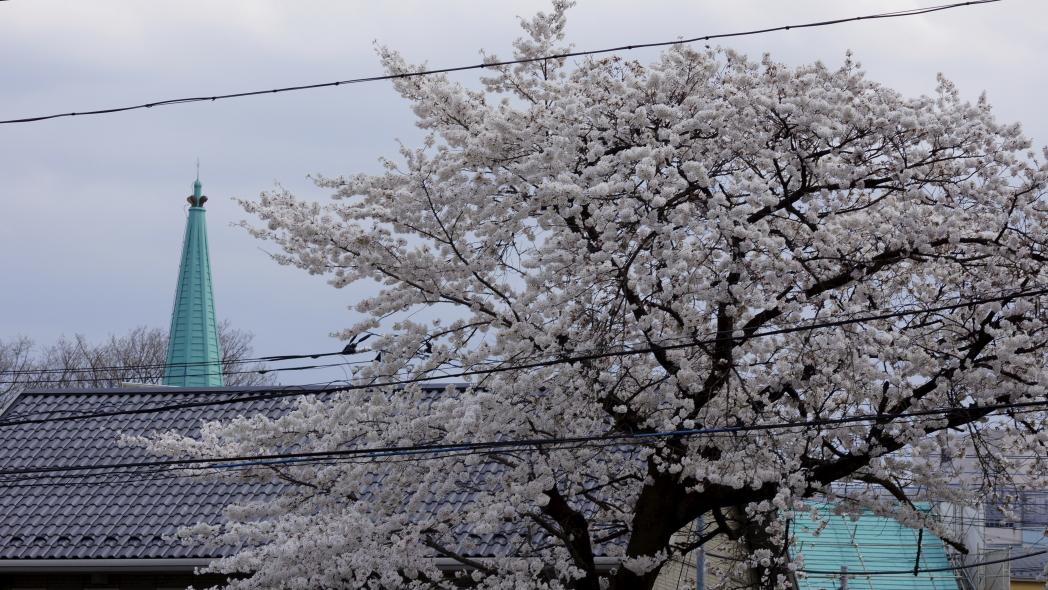 協会の塔と桜20140402