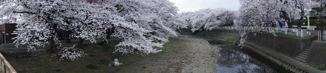 霜川の桜20140401W3