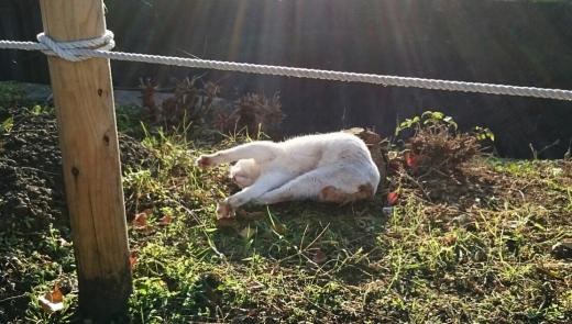 河川敷の白猫3AAA-5 20141113