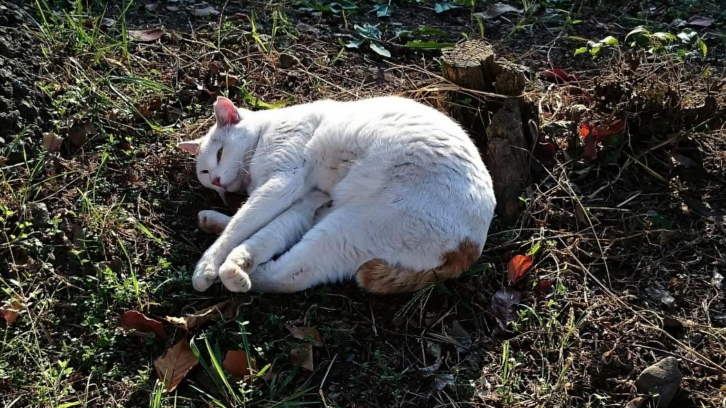 河川敷の白猫5AAA-5 20141113