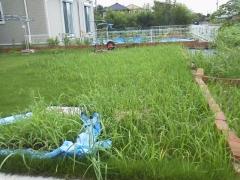 8月草刈り001