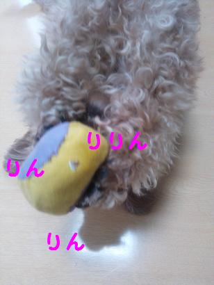 DSC_4513.jpg
