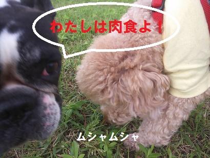 DSC_5115.jpg