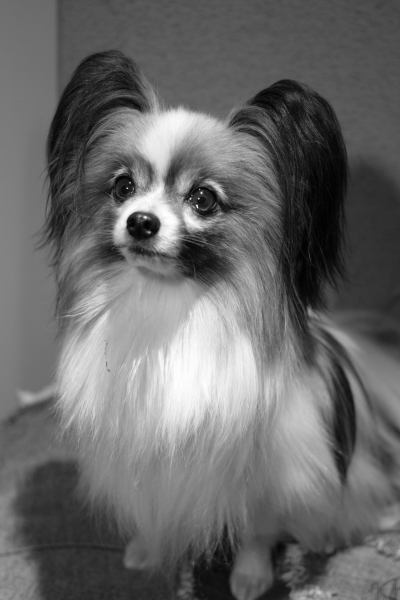 IMG_0333犬@写真部 3月犬@写真部 3月