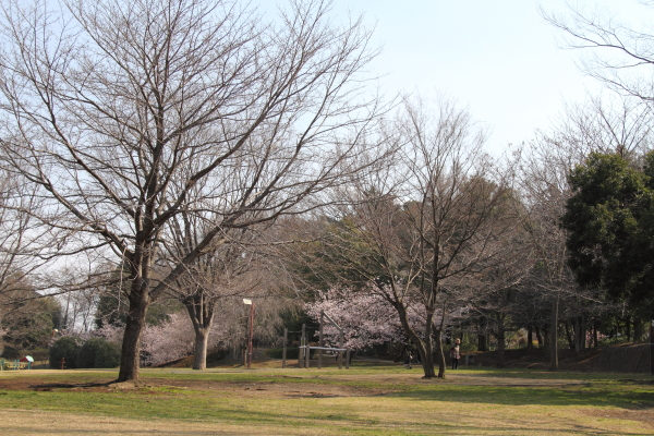 IMG_0487ふるさと公園の桜ふるさと公園の桜