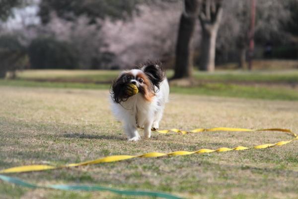 IMG_0494ふるさと公園の桜ふるさと公園の桜