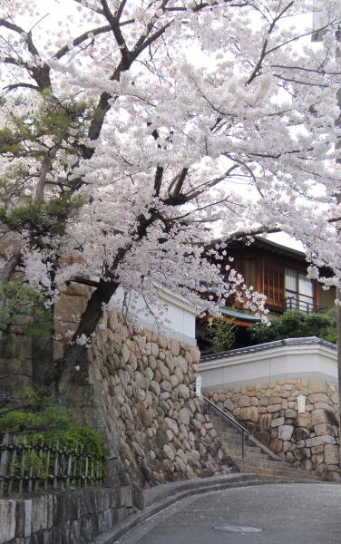 IMG_3589桜 2014桜 2014