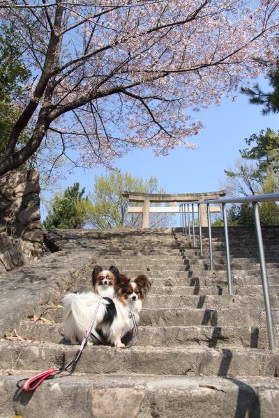 IMG_3630桜 2014桜 2014