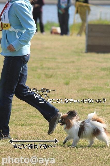 2014年春季訓練競技会 ayaさんダレダレラック012_20140427_044