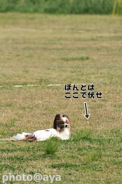 2014年春季訓練競技会 ayaさんダレダレラック017_20140427_059