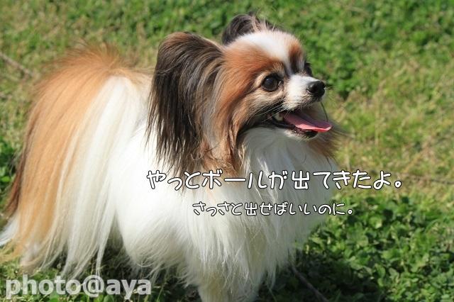 2014年春季訓練競技会 ayaさん029_20140427_105
