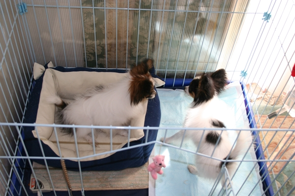 犬達5月3日 ブログサイズIMG_1587