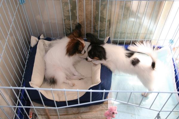 犬達5月3日 ブログサイズIMG_1592