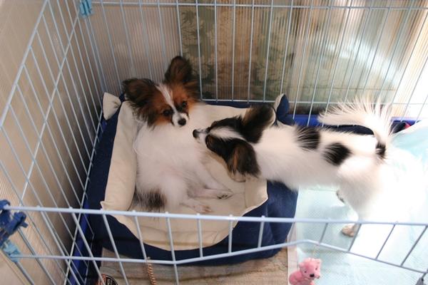 犬達5月3日 ブログサイズIMG_1593