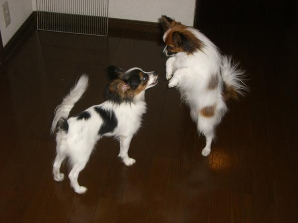 犬達 ブログサイズ画像 015