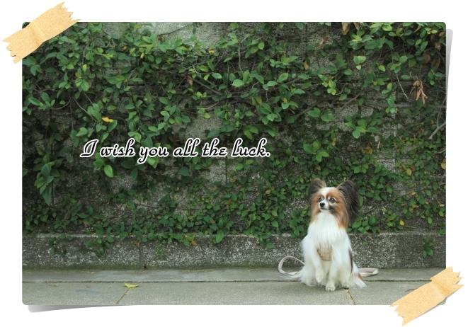 IMG_1379犬@写真部 5月犬@写真部 5月ラックポストカード
