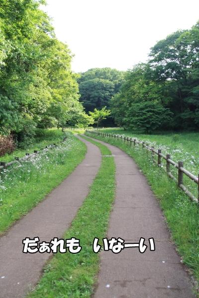 IMG_3784北八朔公園ブログサイズ