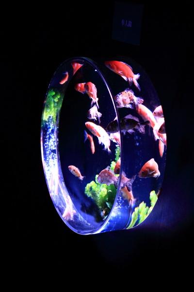 IMG_1378アクアリウム金魚