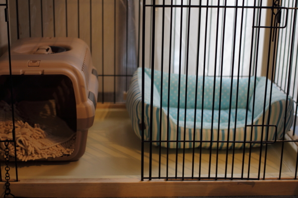 IMG_1466秋のベッド秋のベッド