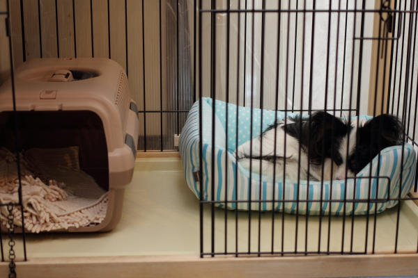 IMG_1469秋のベッド秋のベッド