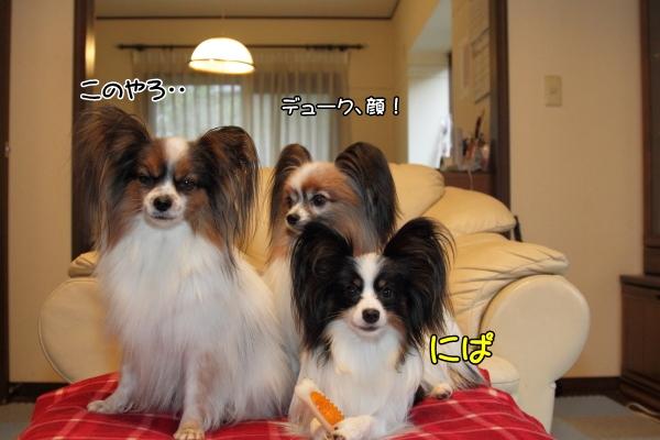 IMG_2621犬達犬達