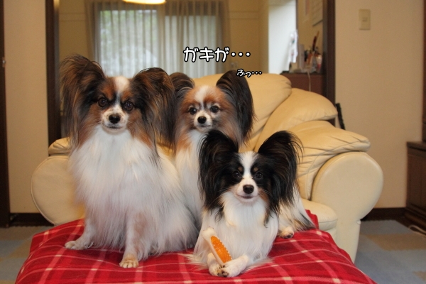 IMG_2623犬達犬達