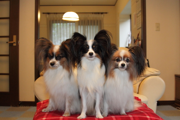 IMG_2629犬達犬達
