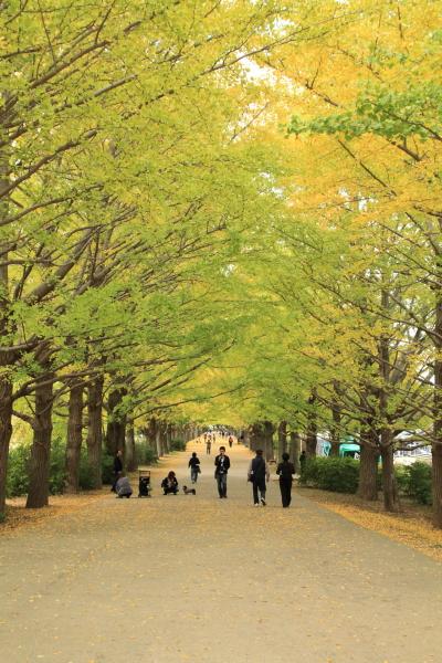IMG_3003昭和記念公園 銀杏昭和記念公園 銀杏