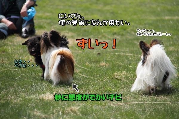 IMG_11042014GW2014GWdoggurann.jpg