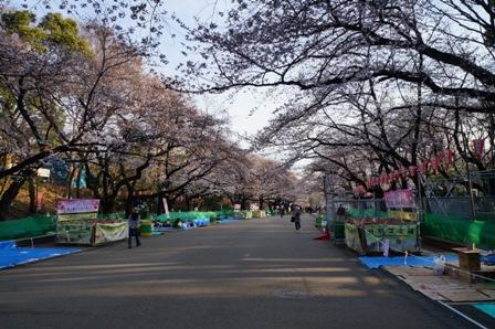 上野公園花見1