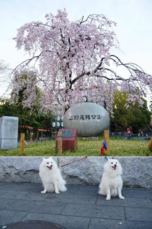 上野公園花見3