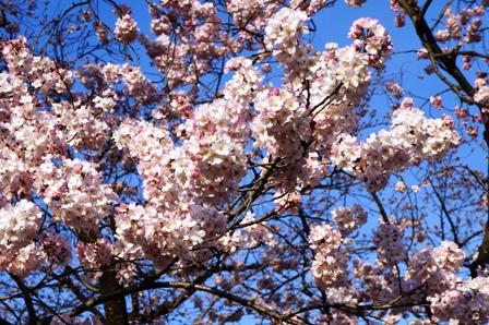 上野公園花見2