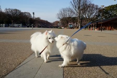 上野公園花見4