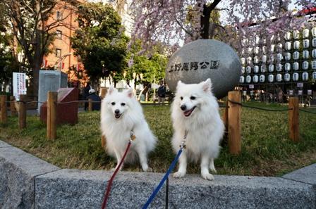 上野公園花見5