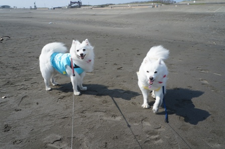 片瀬海岸で遊ぶ