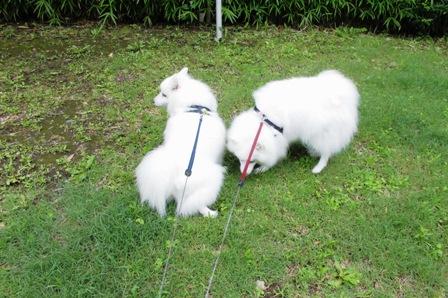 2014-06 散歩1